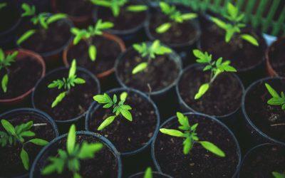 Új pályázat segíti a kertészeti üzemek korszerűsítését